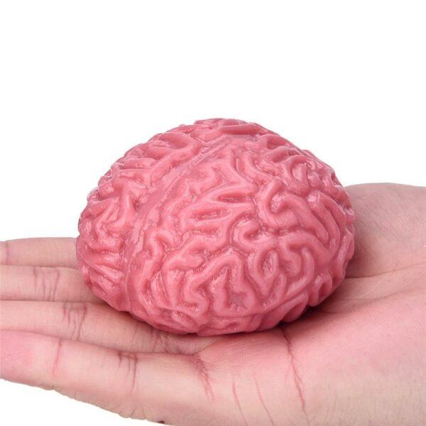 squishy cerveau dans la main