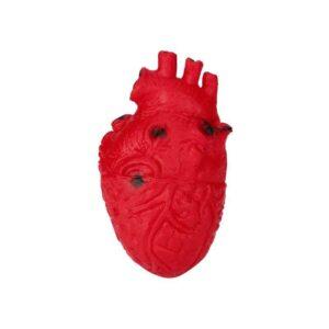 Squishy coeur humain